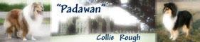 Padawan Collies (FCI) - Nowe zdjęcia Willow'a !!!